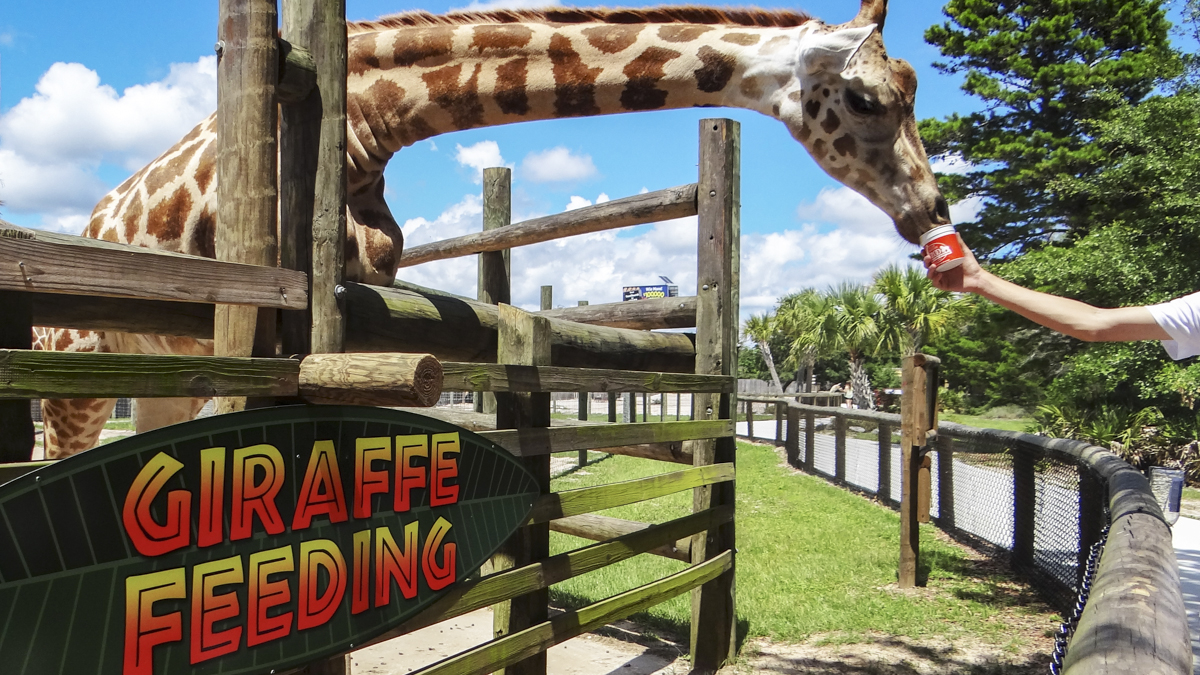 Exterior branded wayfinding for the Gulf Breeze Zoo giraffe feeding area - signgeek Branded Environments